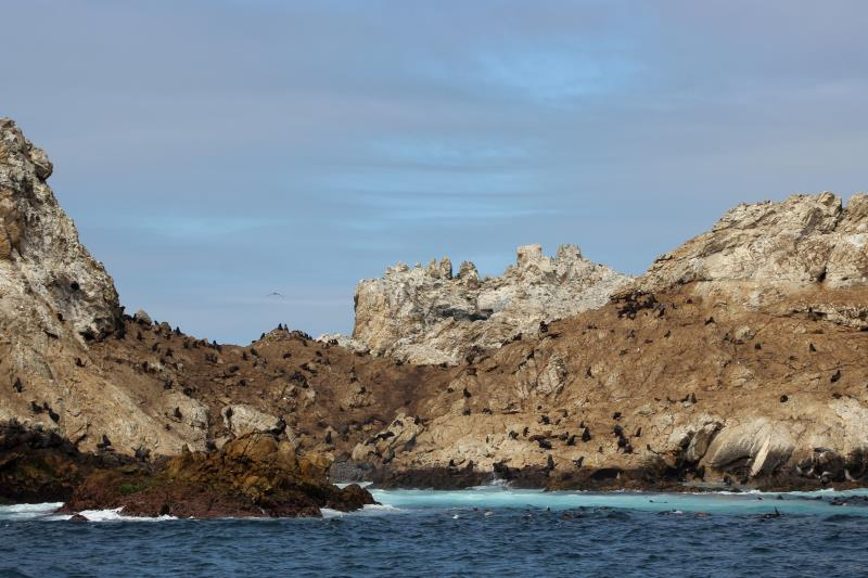 Sea Lions on rocks of Farallon Islands