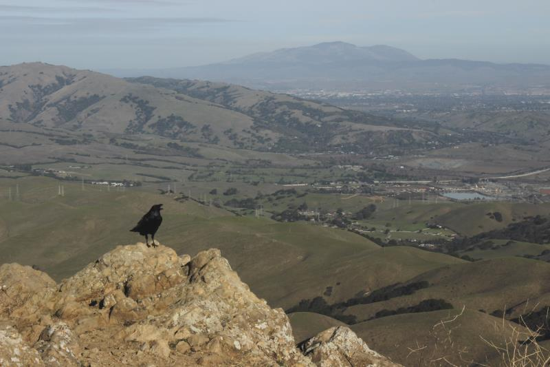 Bird seen at top of Mission Peak