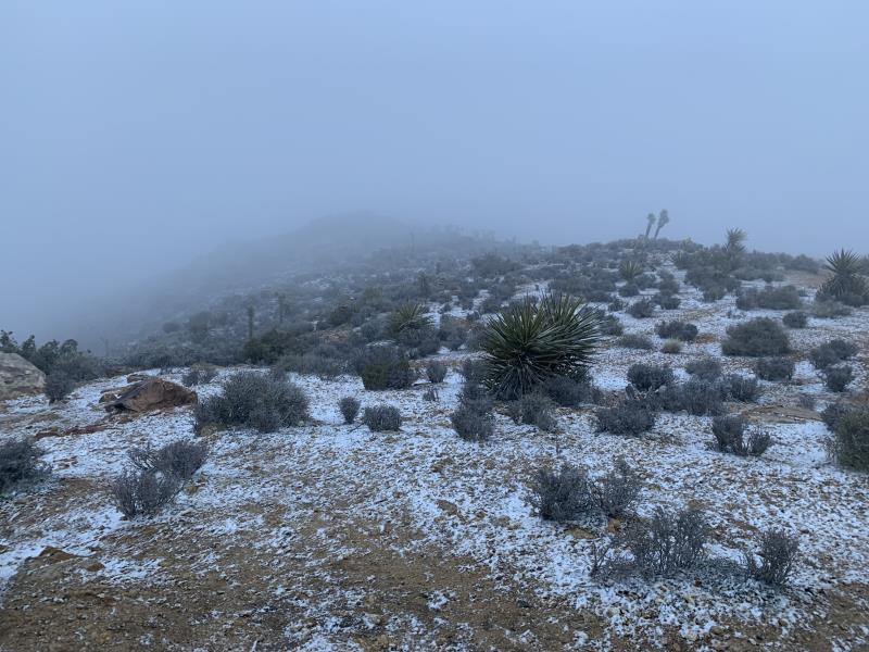 Snowing at summit of Ryan Mountain