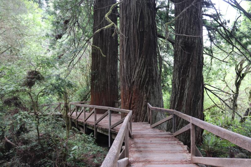 Bridge near Prairie Creek Redwoods State Park Visitor center