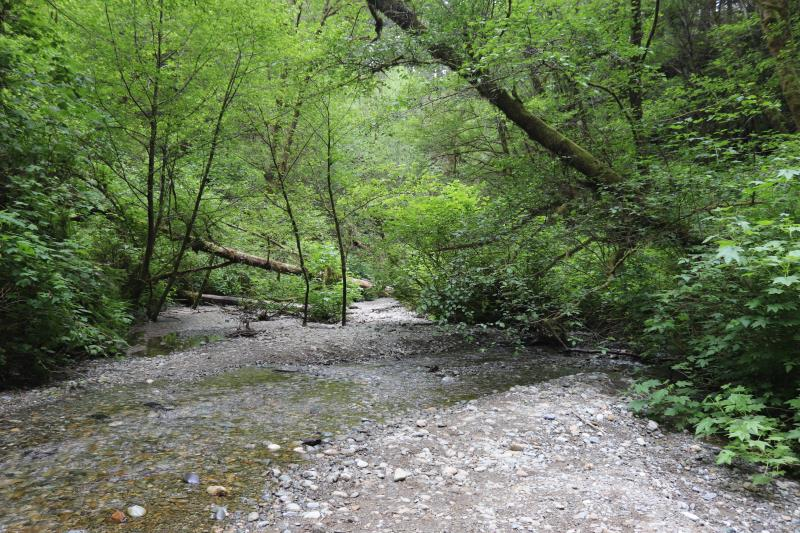 Beginning of Fern Canyon
