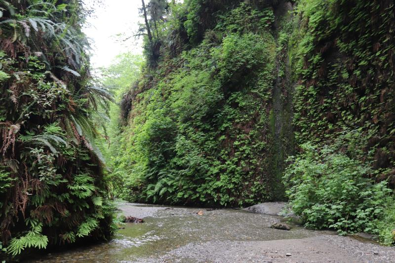 Inside Fern Canyon
