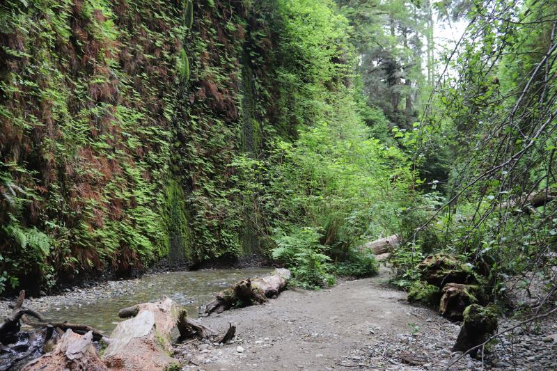 Path in Fern Canyon