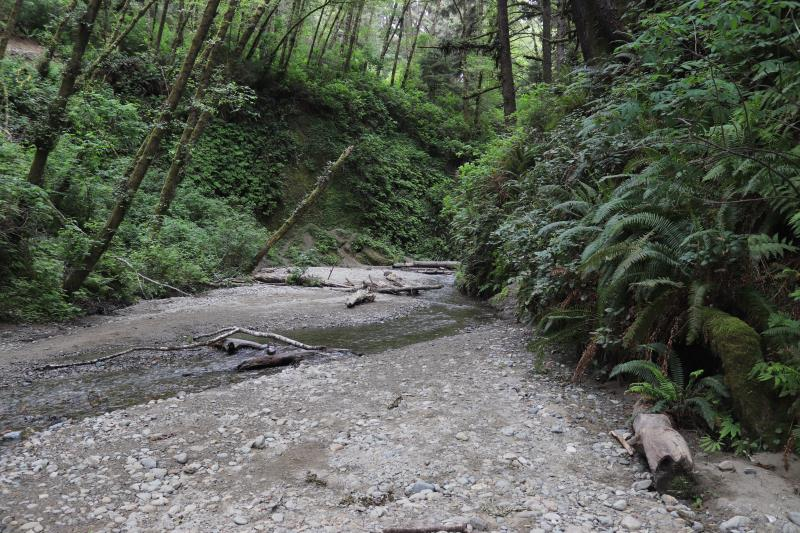 Near end of path at Fern Canyon