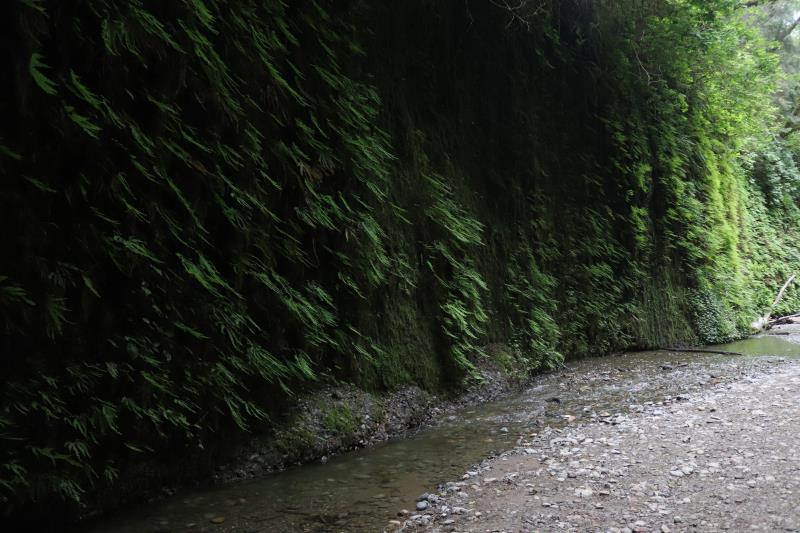 Wall with creek in Fern Canyon