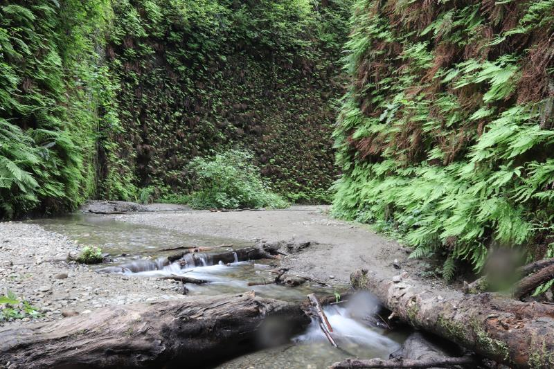 Stream in Fern Canyon