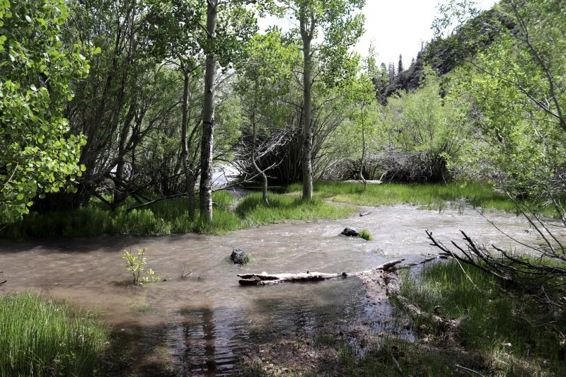 Convict Lake, half way through loop, with flooding