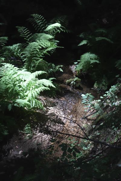 Creek on trail