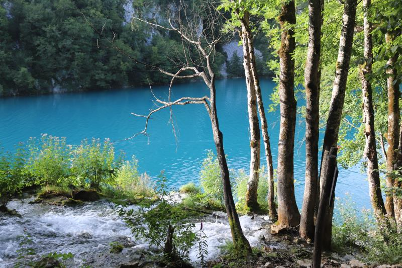 Blue water lake with trees