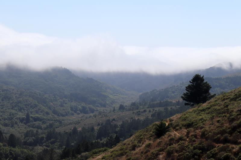 Closer to start of Dipsea Trail, near Mill Valley, after the steps