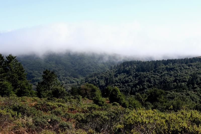 Fog rolling in on Dipsea Trail