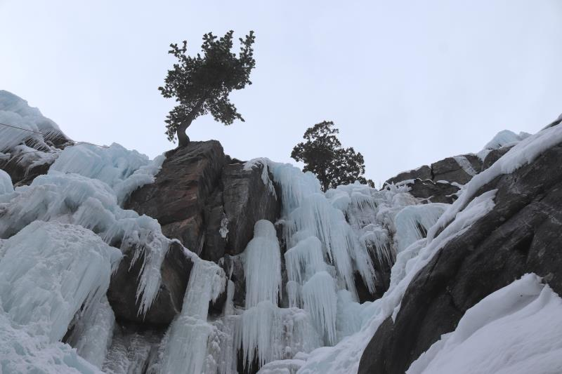 Looking up at ice and trees in South Park section of Ouray Ice Park