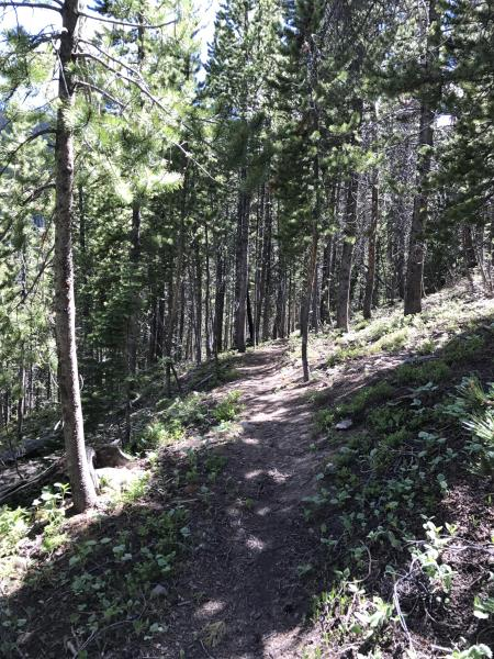 A trail near Peak 8 in Breckenridge