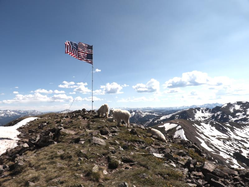 Mountain goats on summit of Buffalo Mountain with stitched American flags
