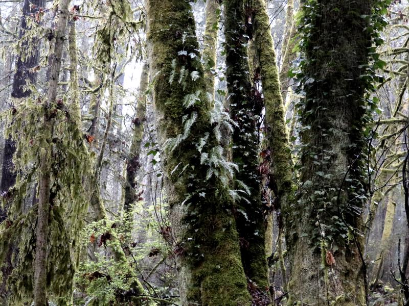 Close up of moss and trees on Burton Loop
