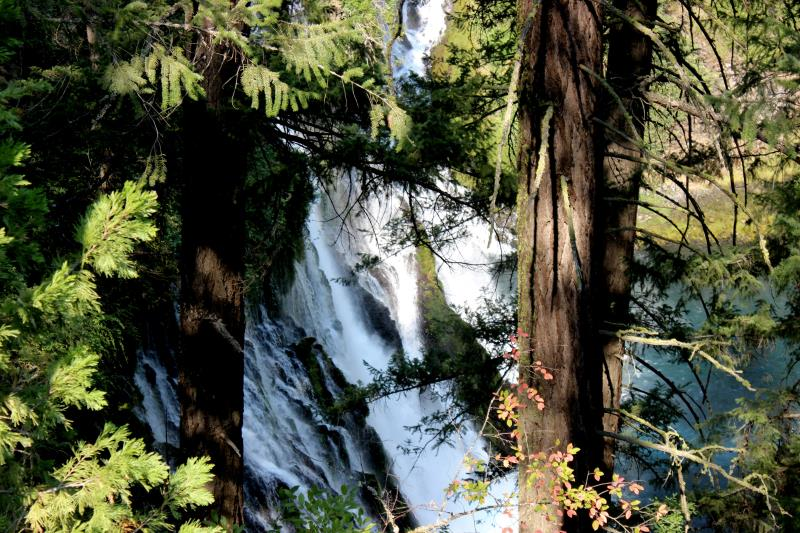 Burney Falls seen through trees near end of hiking loop